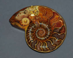 Аммонит – что это за камень, его свойства