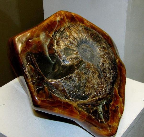 Симбирцит раковина моллюска